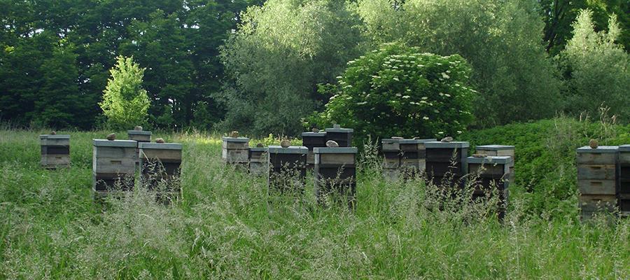 Sommerstand mit Honigräumen.