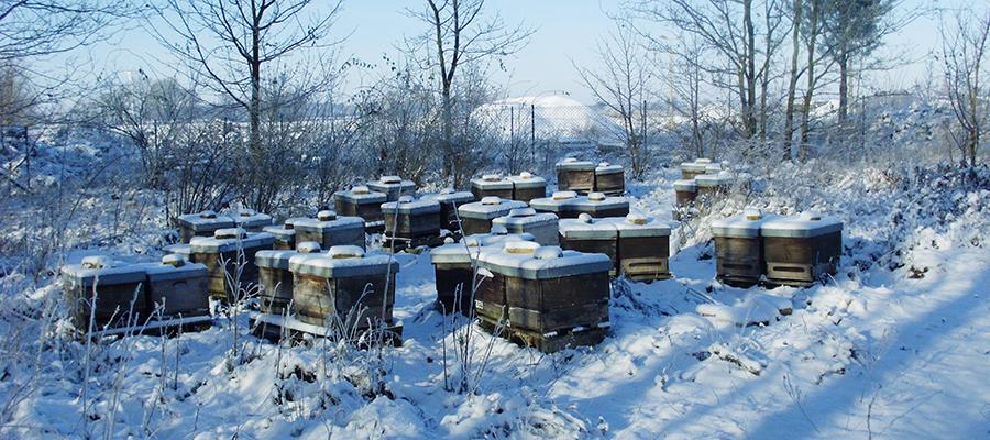 Bienenstand im Winter.